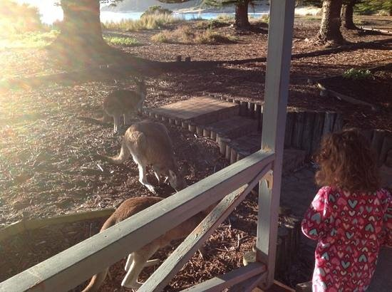 NRMA Murramarang Beachfront Nature Resort: An early morning greeting for our kids