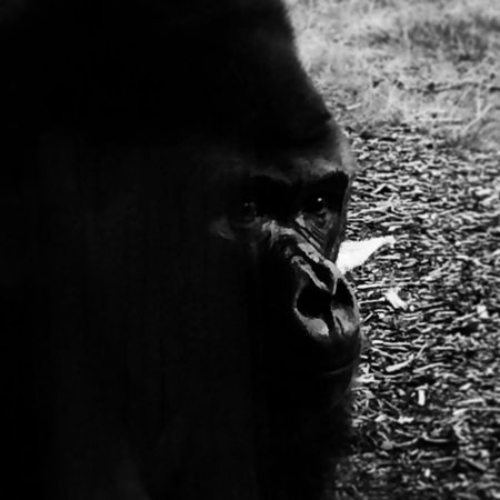 ZSL London Zoo: This fella is amazing…