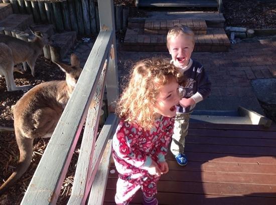 NRMA Murramarang Beachfront Nature Resort: kids loved the Kangaroo visits