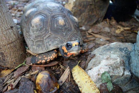 The Azure Hotel : Turtle sanctuary