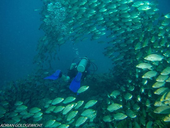 Mad About Diving: Nice school of fish