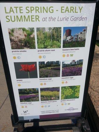 Millennium Park: Posters detail seasonal blooms.