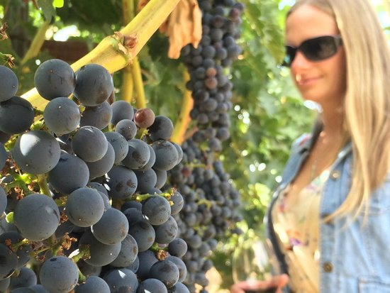 Frog's Leap Winery: The Grapes