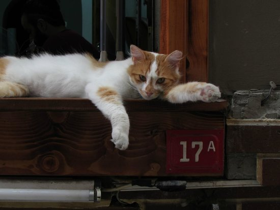 Historic Areas of Istanbul : Local Cat