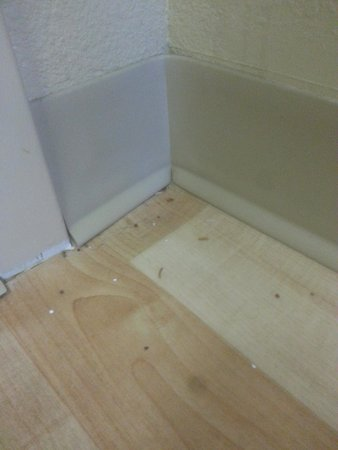 Extended Stay America - Colorado Springs - West : Dirty floors