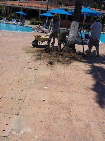 Occidental Nuevo Vallarta: Removing Trees - Blocking Pool - Exposed Wires