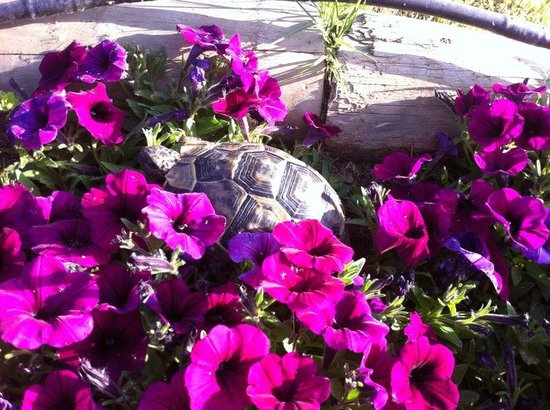 TUI MAGIC LIFE Waterworld: kaplumbağa:)