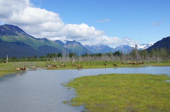 Alaska Wildlife Conservation Center: AK Wildlife Refuge