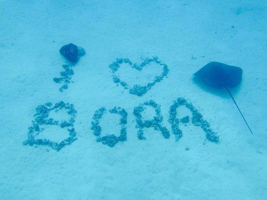 Four Seasons Resort Bora Bora: The shark and sting ray experience at The Four Seasons.