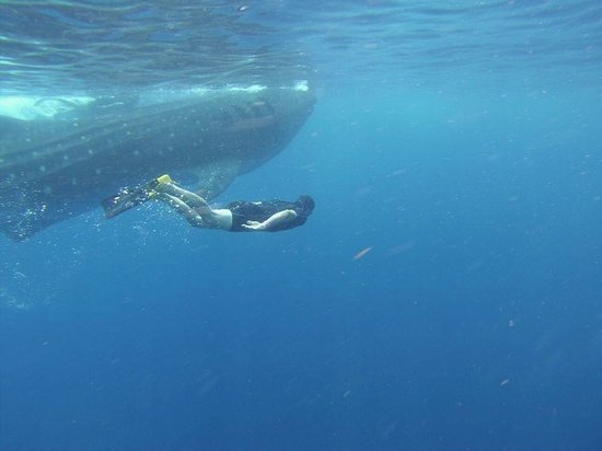 Barcelo Maya Colonial: Whale Shark Excursion