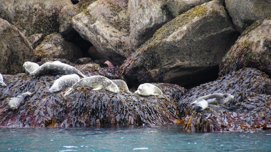 Alaska Saltwater Lodge Small Group Whale Watching, Wildlife & Glacier Tour : Harbor Seals
