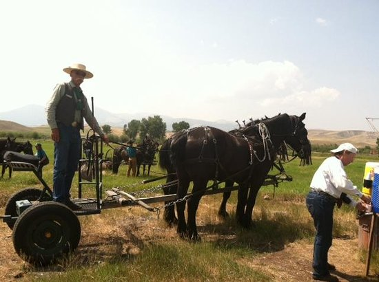 Grant-Kohrs Ranch - National Historic Site: Haying with horses demonstration