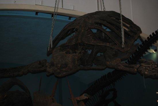 The Museum @ Black Hills Institute: Big Turtle