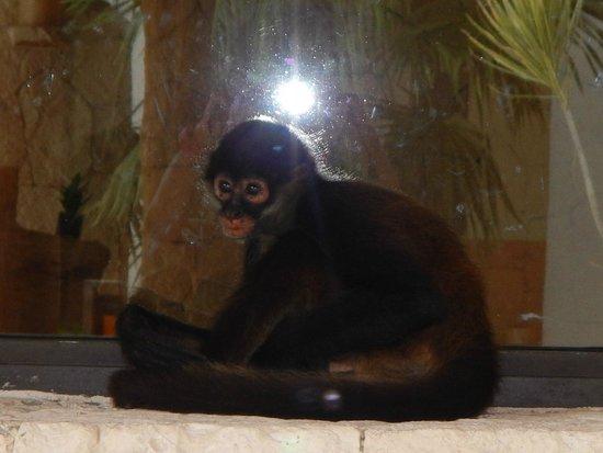 Secrets Maroma Beach Riviera Cancun: JoJo the Secret's Monkey