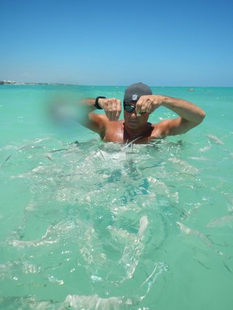 Secrets Maroma Beach Riviera Cancun: Fish feeding at SMB