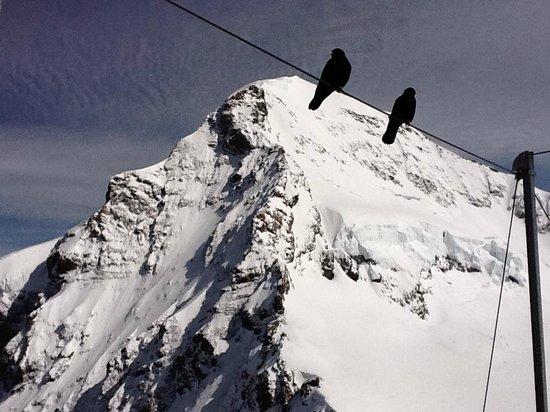 Jungfraujoch: Vista do Observatório