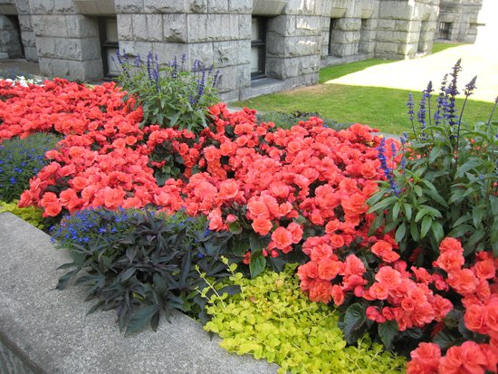 The Fairmont Empress : The rose garden