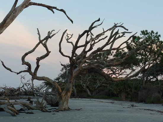 Driftwood Beach: The Beauty of Nature!