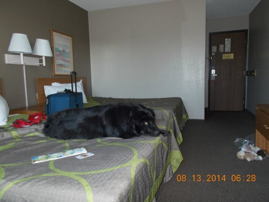 Super 8 Cos/Hwy. 24 E/Pafb Area: Room