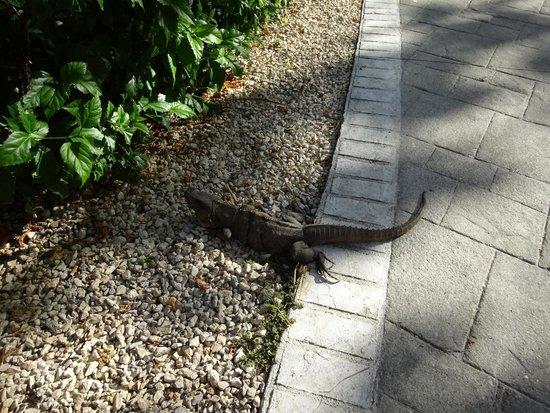 Grand Bahia Principe Coba : lizards