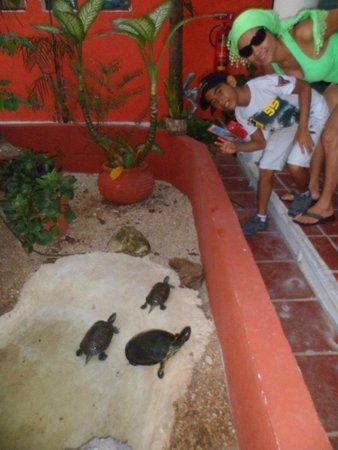 El Acuario Hotel: estanque de Tortugas