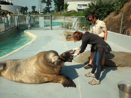 Aquarium du Quebec : Animalier d'un jour à l'aquarium de Québec