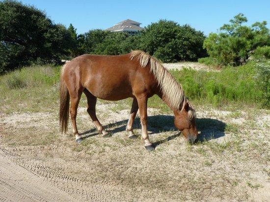Bobs Wild Horse Tours: HORSES