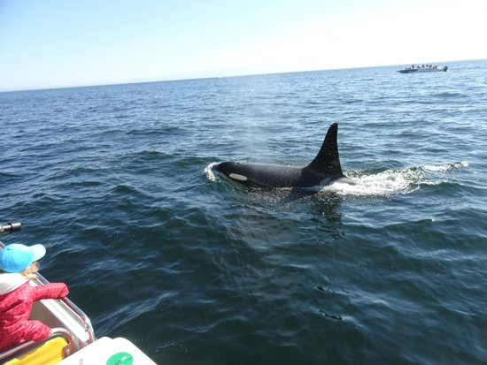 Eagle Wing Whale Watching Tours : Nice and close!