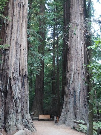 BEST WESTERN PLUS Inn Scotts Valley: Henry Cowell Redwoods State Park