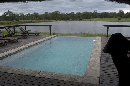 Arathusa Safari Lodge : Pool overlooking watering hole