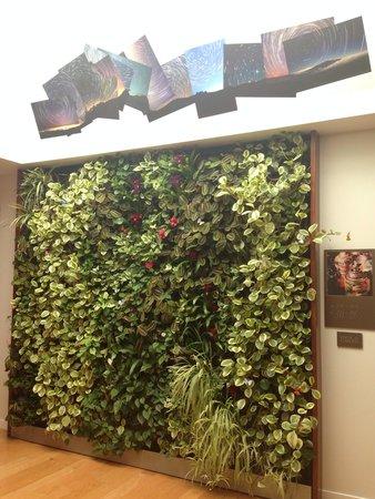 Hotel Indigo Santa Barbara: Living wall