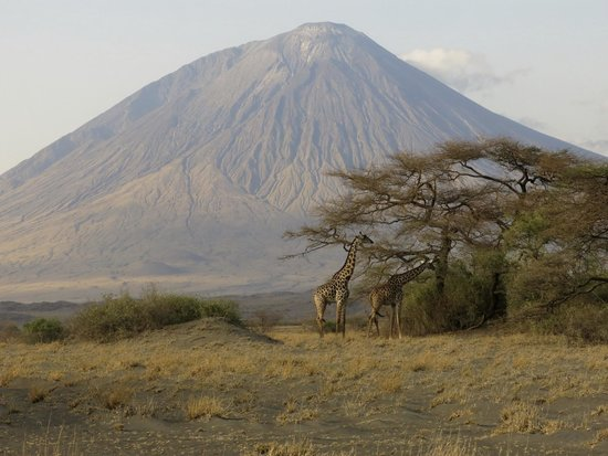 Ngare Sero - Lake Natron Camp : Giraffe near camp, views of Lengai