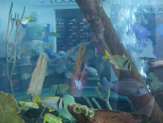 Skeleton Picture Of Ripley 39 S Aquarium Of The Smokies