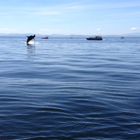 Wild Whales Vancouver: a tail wave and a belly!!