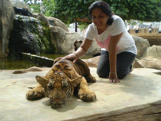 Tiger Temple ( Wat Pa luang Ta Bua) : Patting a Cub