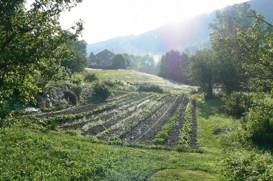 B&B Le Chant de l'Eau : le champ cultivé par les proprios, avec la jument ardenaise