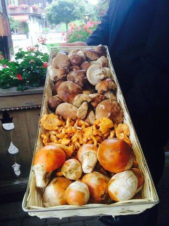 Restaurant Chesery : Freshly hand Picked mushrooms from the neighborhood