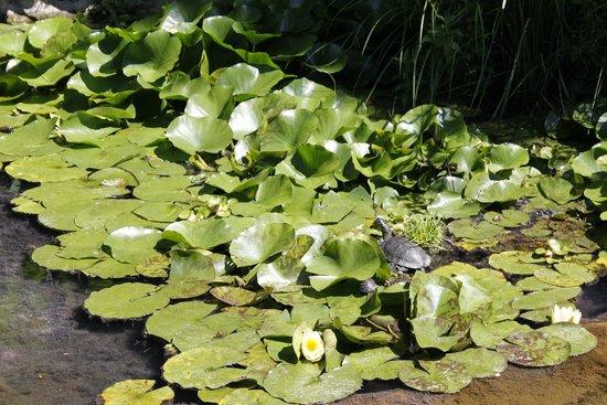 Vue du jardin picture of jardin aquatique aux fleurs de for Jardin aquatique
