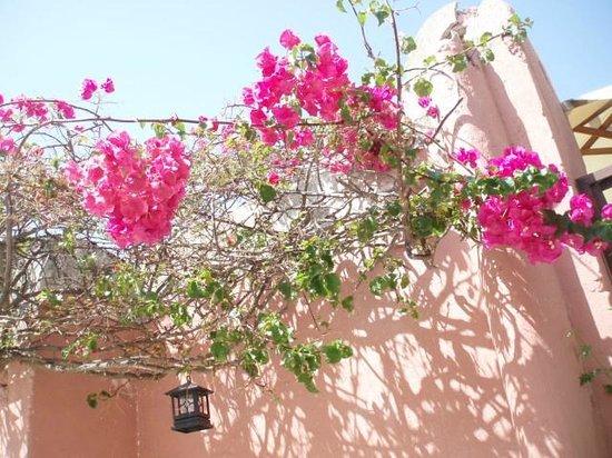 Casa Antica : terrasse
