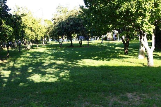 Taray Botanico: Foto del jardin al salir de las habitaciones