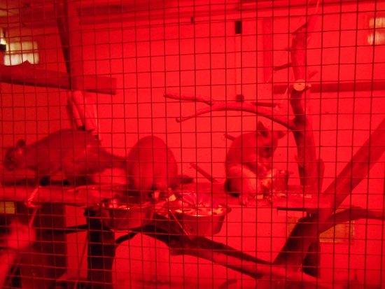 Le Parc Australien : les opposums vivent la nuit