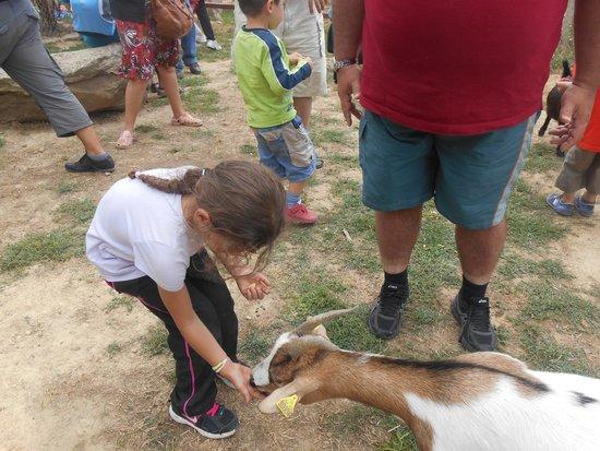 Le Parc Australien : nourrissage des chèvres à 14h15