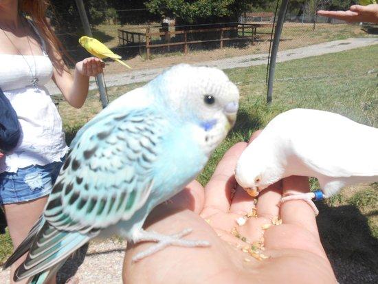 Le Parc Australien : nourrir les perruches: un joli moment!
