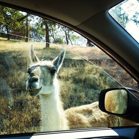 Wildlife Safari: object is definitely closer than they appear