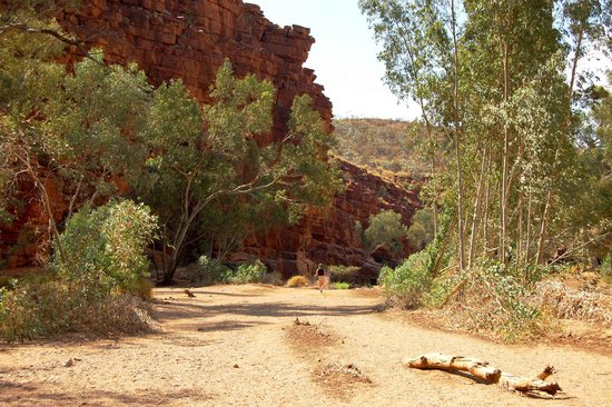 West MacDonnell National Park, Australië: Trephina Gorge East Macs