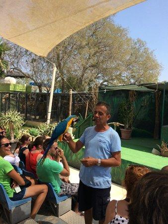 Mediterraneo Marine Park: птицы