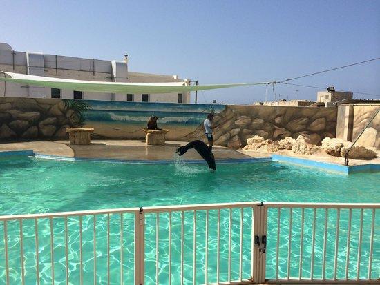 Mediterraneo Marine Park: морские котики