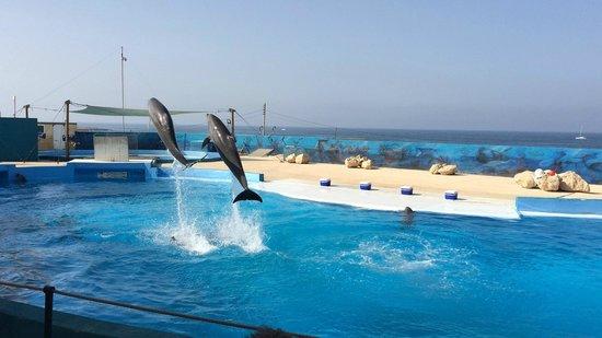 Mediterraneo Marine Park: дельфины