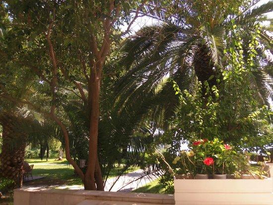 Hotel King Saron : Jardins