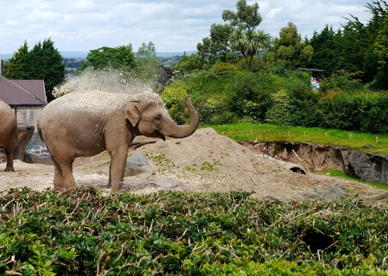 Tina the elephant Picture of Belfast Zoo Newtownabbey TripAdvisor